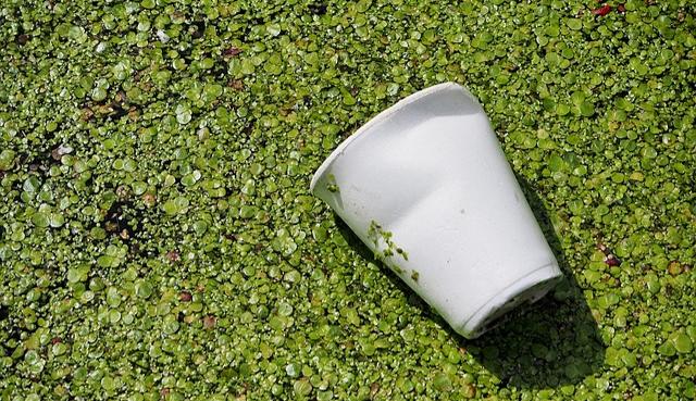 Image d'un gobelet en plastique dans la rivière