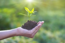 MSc Biocontrol Solutions for Plant Health - BOOST